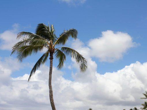 Your Hawaii check-list