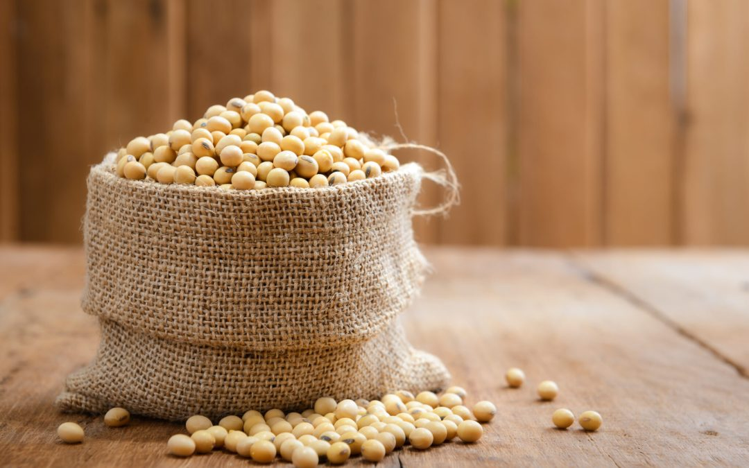 Soy: Good or Bad for you?